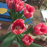 Tulips. They make me smile too!